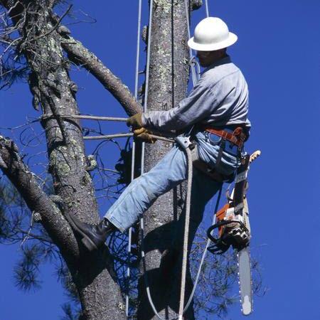 Arborist tree service charlottesville va